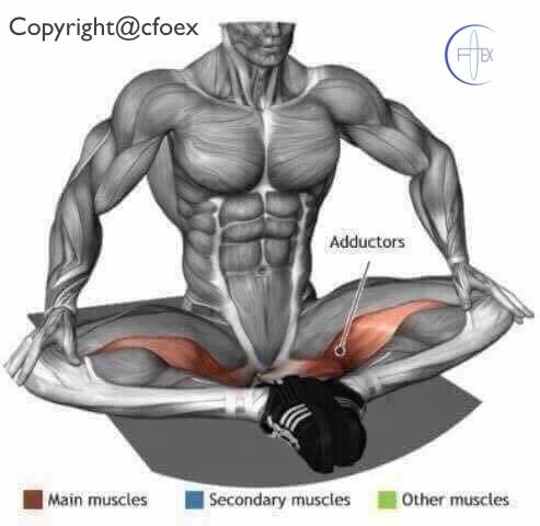 Estiramientos musculares miembros inferiores