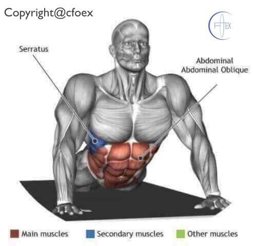 Estiramientos musculares miembros superiores